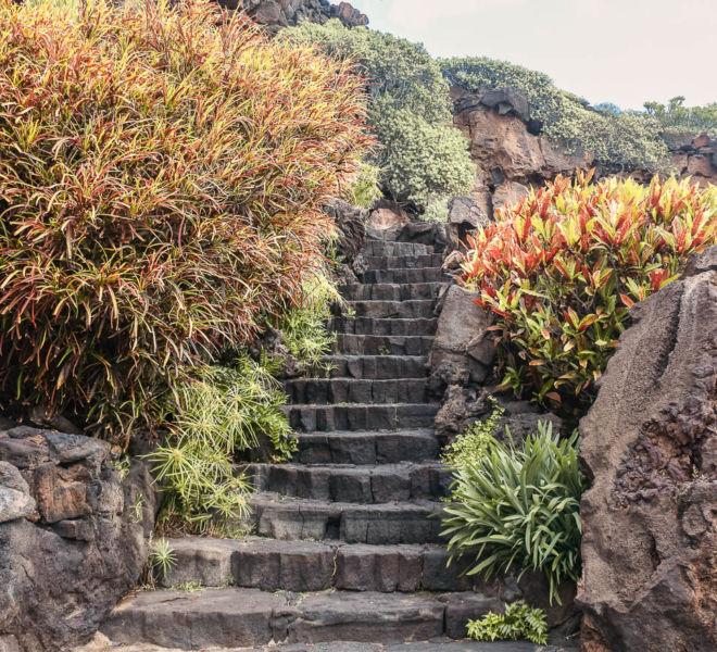 Lanzarote Jameos del Agua Pflanzen